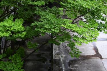 大阪スナップ ニコンZ50+Nikon AF-S NIKKOR 58mm f/1.4G