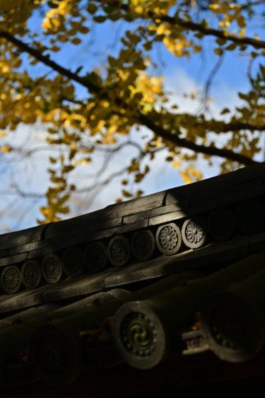 作例:NIKKOR Z 70-200mm f/2.8 VR S