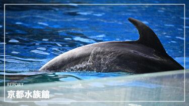 京都水族館/イルカ【NIKKOR Z 70-200mm f/2.8 VR S】