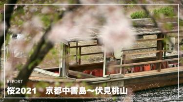 桜2021 京都中書島〜伏見桃山