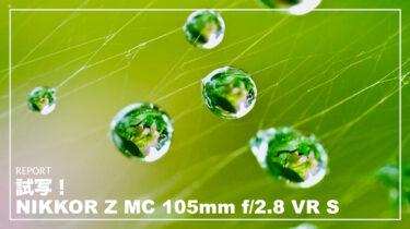 試写にいってきました!NIKKOR Z MC 105mm f/2.8 VR S【作例・使用感】